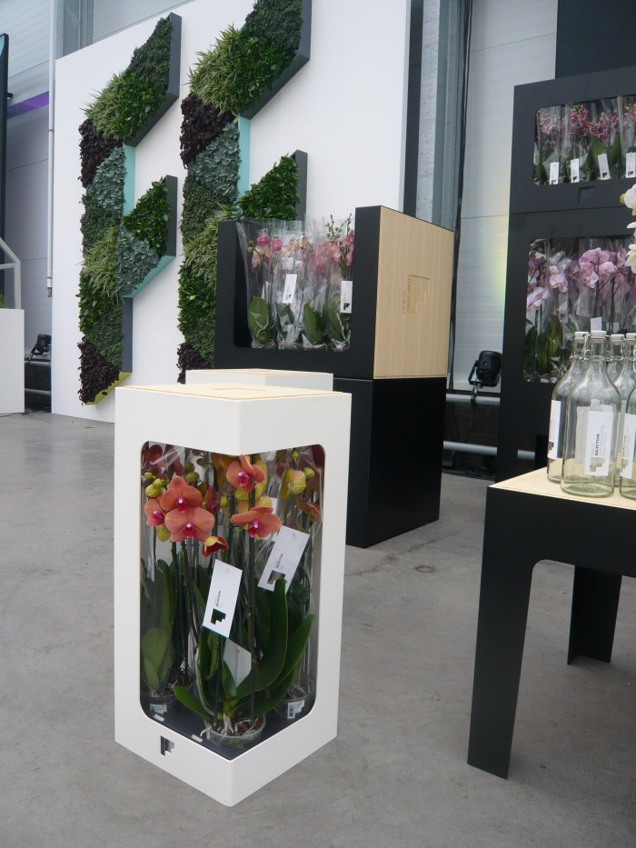 Orchideeen display maarten olden